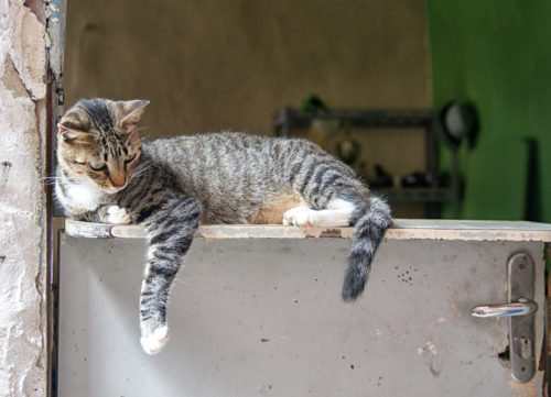 favela cat